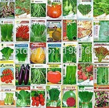 VISTARIC Graines Coriandre Coriandre 50pcs Rich Aroma Bonne cuisine Herb Diy Garden Semences Potagères bon goût délicieux sain bateau libre