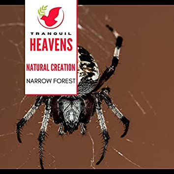 Natural Creation - Narrow Forest