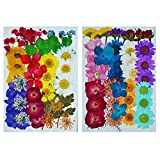 72 pcs LoveDiyLife Real Dried Pressed Flowers Mixed Natural Assorted Colorful Daisy for DIY Resin Jewelry Art Floral Decors - Color 1