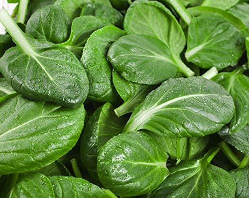 HONIC 1000 Seeds: Senf Tatsoi/Asian Non GMO Erbstück Gemüsesamen Sow Keine GMO® USA