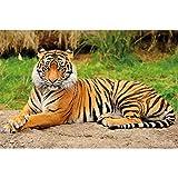 GREAT ART® Poster – Tiger – Majestätisches Tier