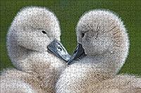 LHJOY 大人のための1000ピースのパズル小鳥のガチョウの子2匹の動物子供のための誕生日プレゼントとホリデーギフト 75x50cm