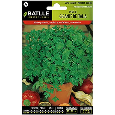 Semillas Hortícolas - Perejil Gigante d´Iltalia - Batlle