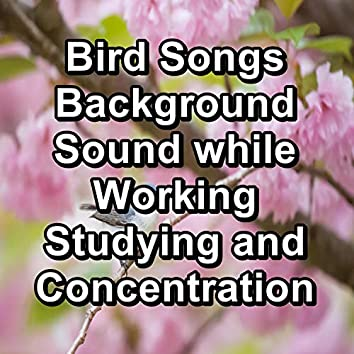 Bird Songs Background Sound while Working Studying and Concentration