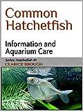 Common Hatchetfish