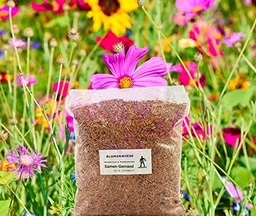 Blumenwiese Wildblumenwiese Samen 500 g Frische Saat