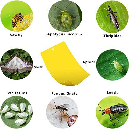 40 Sticker, Gelbtafeln und Blautafeln Fliegenfallen Klebrige Insektenfalle - 5