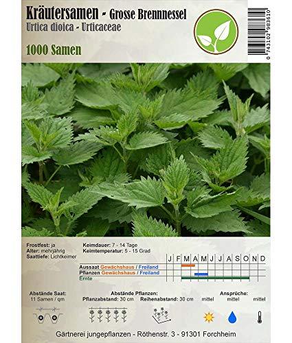 Semi di erbe - Ortica / Urtica dioica 1000 Semi