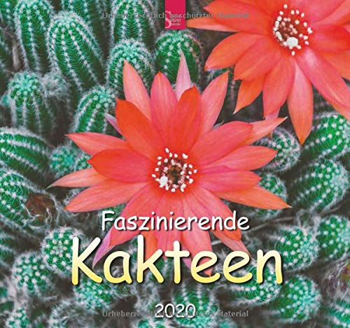 Faszinierende Kakteen: Original Stürtz-Kalender 2020 - Mittelformat-Kalender 33 x 31 cm