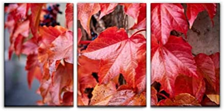 Gracelapin Canvas Wall Art Decor, Parthenocissus Red Leaves at Autumn Printed Oil Painting Home Decoration- 3 Panels
