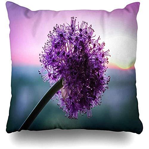 Mackinto Kissenbezug Platz 18 x 18 rot blau Blume Zwiebel Allium Suworowii auf Blütenblatt Sunsen Natur Bloom Blooming Blossom Bright