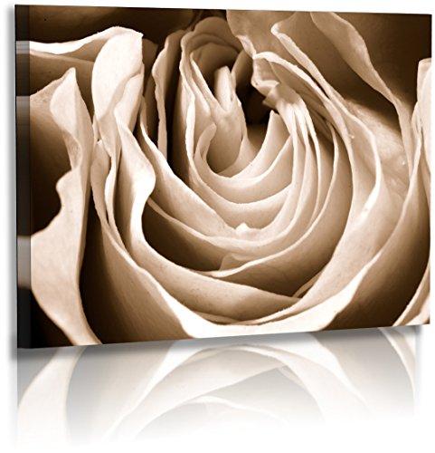 Premium - Acrylglas - Blumenbild - Naturbilder - Blumenfotos - Rose - Sepia - Wandbilder XXL - Blume - Bild - Rosenbilder - Blüte - Knospe - Acrylglasbild - Glasbild (120 cm x 80 cm)