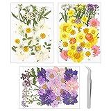 Metagio - 111 pezzi di fiori secchi naturali essiccati misti di foglie secche misti per arte fai da te, resina, scrapbooking, artigianato con 1 pinzetta