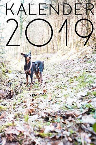 Kalender 2019: praktischer & schlichter Kalender - 1 Woche 2 Seiten - Feiertage und Kalenderwoche - Softcover mit Zwergpinscher Hunde Print auf dem Cover