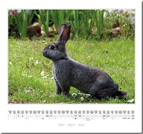 KANINCHEN: Original Stürtz-Kalender 2018 – Mittelformat-Kalender 33 x 31 cm - 5