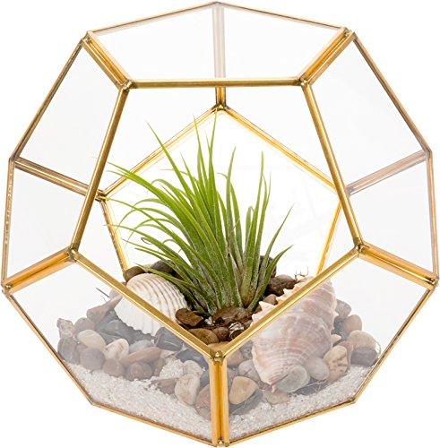 Mindful Design Glass Terrarium - Geometric Dodecahedron Desktop Garden Planter (Gold)