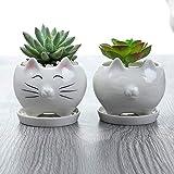 AZOI 3'süße Katze Keramik Saftige Blumentöpfe,Blumentopf mit Abnehmbarer Untertasse,Moderne...