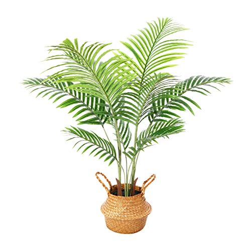 Ferrgoal Plantas