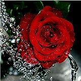 SHHSGZ Rosa de Agua Que Fluye 500 Piezas Rompecabezas de Madera Juegos para Adultos niños Juguete Puzzles para Arte Decoración del Hogar Regalo