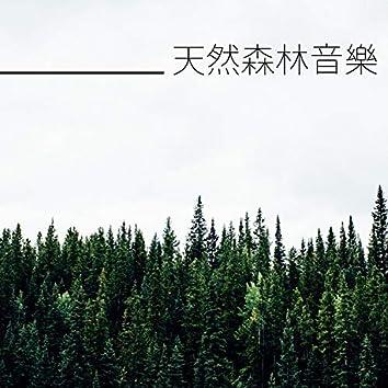 天然森林音樂 - 最適合快速入睡的純音樂和大自然聲音