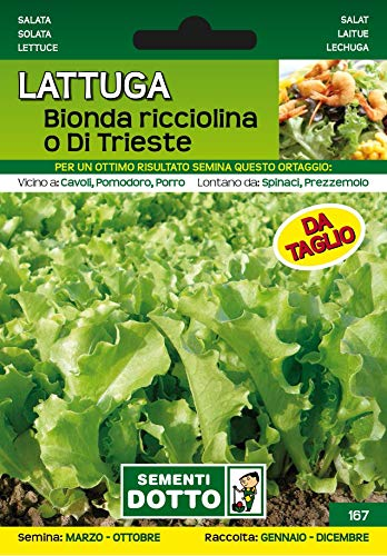 semi di Lattuga Bionda Ricciolina o di Trieste gr 7,6