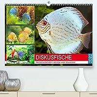 Diskusfische. Die bezaubernden Lieblinge vieler Aquarianer (Premium, hochwertiger DIN A2 Wandkalender 2022, Kunstdruck in Hochglanz): Die beliebten Buntbarsche aus dem Amazonasgebiet (Monatskalender, 14 Seiten )