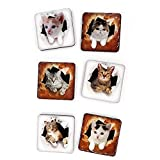 TEYNE 6PCS Crystal Fridge Magnets for Whiteboard, Cat Magnets for Refrigerator, Cute Magnets for Fridge, Decorative Magnets for Dry Erase Boards, A Nice Magnetic Decorations for Office and Kitchen