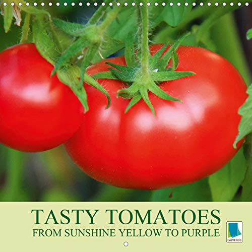 Tasty tomatoes - from sunshine yellow to purple (Wall Calendar 2018 300 × 300 mm Square)