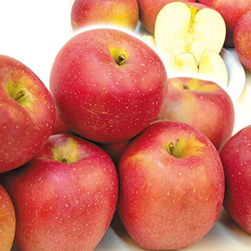 国華園 りんご 青森産 印度 木箱 約20kg 1箱 食品