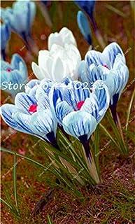 GEOPONICS Semillas: 100 Pcs Freesia Bonsai Plant, No fresia Bulbos flores de las orquídeas de colores Plantación fragante flor de Bonsai magnífico jardín de DIY: k