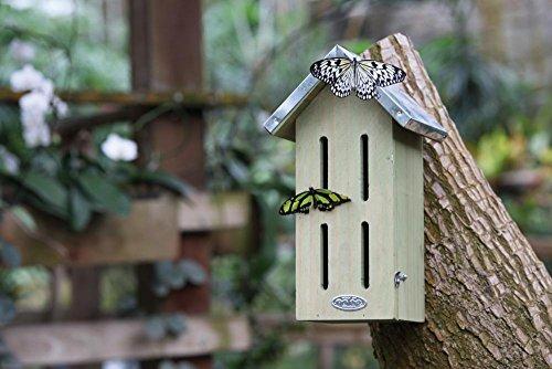 Schmetterlingskasten von Esschert - 3
