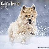 Cairn Terrier - Cairn Terrier 2022 - 16-Monatskalender: Original Avonside-Kalender [Mehrsprachig] [Kalender] (Wall-Kalender)