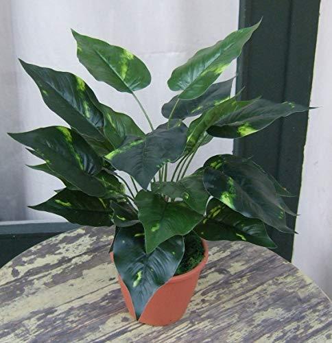 Licht & Grün Künstliche Pflanze Dieffenbachia getopft ca. 45cm Top Qualität NEUHEIT