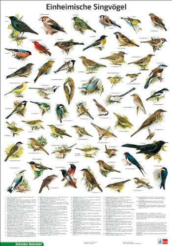 Schreiber Naturtafeln, Einheimische Singvögel