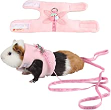 Best walking your guinea pig Reviews