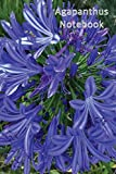 Agapanthus Notebook: A handy sized journal for all of your planting guides and garden ideas for landscaping.
