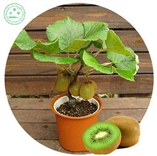 graines d'arbres graines de plantes fruitières de jardin Mini Fruit bonsaïs délicieux petits arbres fruitiers 100 pcs A93