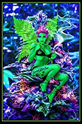 in budget affordable Studio B Weed Fairy Poster 24 x 36 inches without black lights