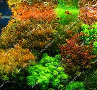 Mixed Aquarium Plant Grass bonsai, Water Grass Lawn Fish Aquarium Decorative Landscaping New Turf Plants-200 Pcs Free Shipping : 7