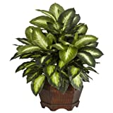 Nearly Natural 6639 24in. Golden Dieffenbachia Silk Plant,Green,12' x 12' x 35'