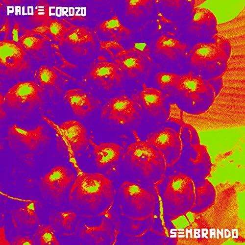 Palo 'e Corozo