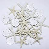 Jetec 24 Pieces Starfish Assorted 3.14 Inch Starfish for Crafts Sand Dollar Ornament White Resin Pencil Finger Starfish Wall Decor Beach Starfish Decor for Wedding Party Decor DIY Craft Supplies