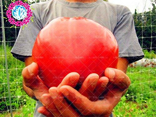 Peach mélangé avec des graines de tomate 200 pièces/sac