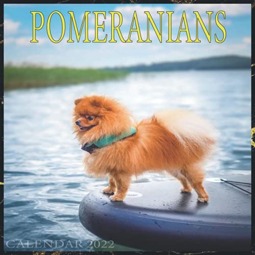 Pomeranians Calendar 2022 - monthly calendar 2022: Dog Breeds Calendar 2022 - Pomeranians lovers
