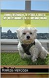 Cómo Enseñar a Tu Perro a Hacer Sus Necesidades en el Mismo Lugar