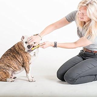 عروض Arm & Hammer Clinical Care Dental Gum Health Kit for Dogs
