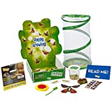 Insect Lore Butterfly Garden: Gift Set with Live Cup of Caterpillars – Life Science & STEM Education