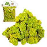 Liquen Preservado Premium 250 gr. Color Verde Manzana (Verde Acido). Musgo Preservado. Uso: Cuadros Vegetales Preservados, Diorama, Presepio, Modelismo.