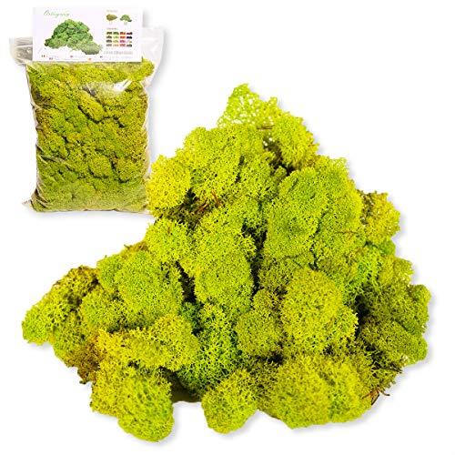 Ortisgreen Lichene Stabilisiert Premium 250 gr. Farbe Apfelgrün (Mibe) Ideal für Vegetal Quadries, Diorama, Weihnachtskrippe, Modellbau Stabilisierte Moos Grün Stabilisiert