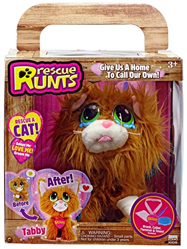 Rescue Runts - Rescue A Cat! Tabby